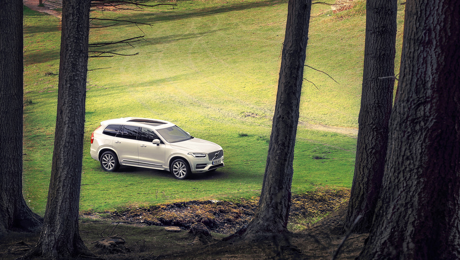 White-Volvo-XC90-forest-july-17-crop